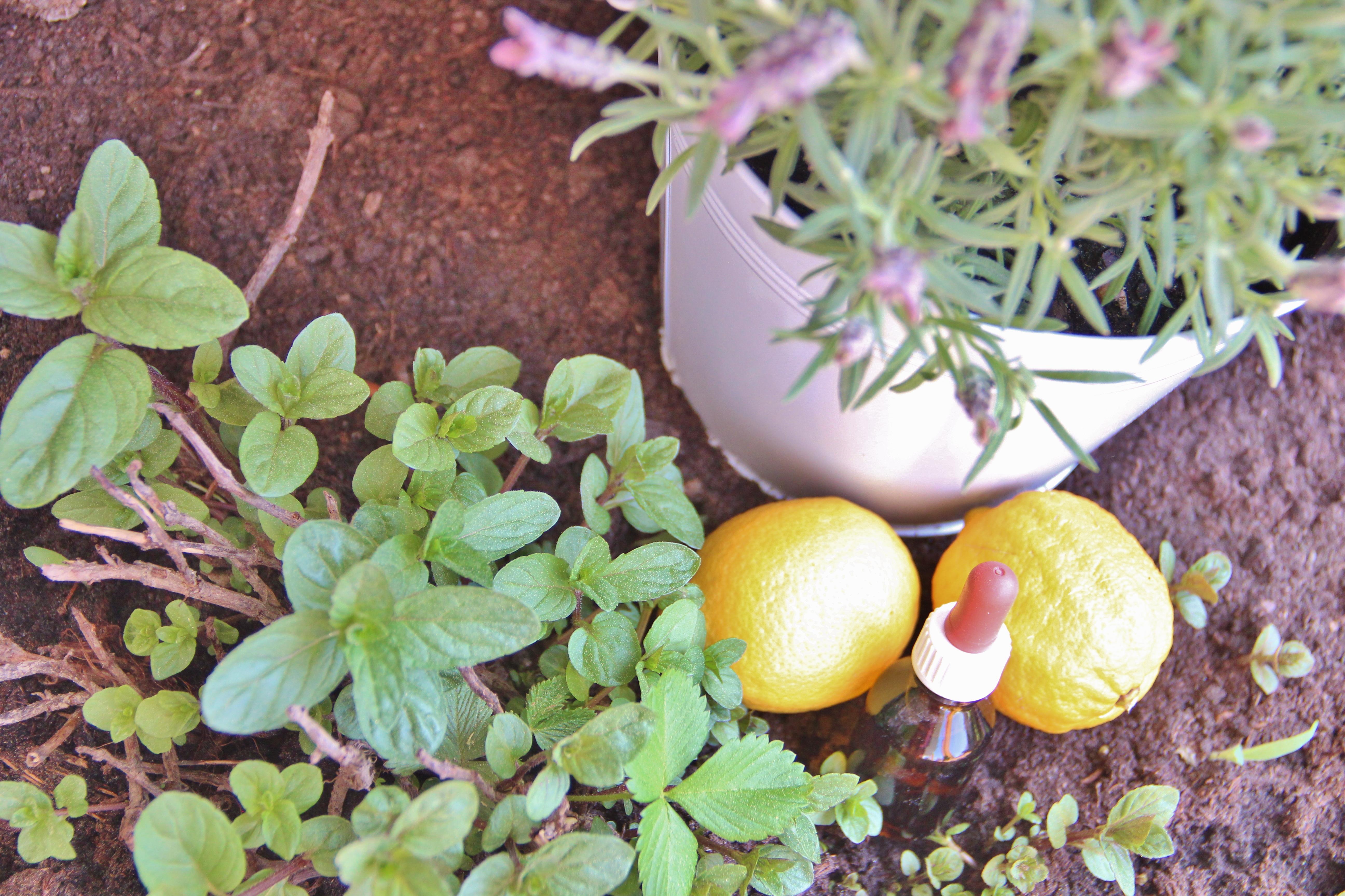 Ätherische Öle für die Hausapotheke und Kosmetik